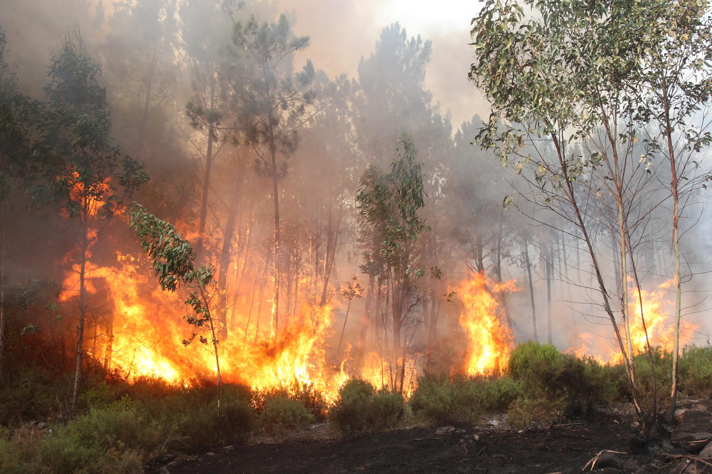 Cinco bombeiros feridos no incêndio de Vale de Cambra