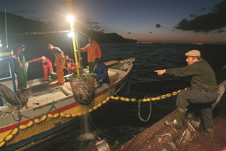 Pesca da sardinha em risco já no próximo ano