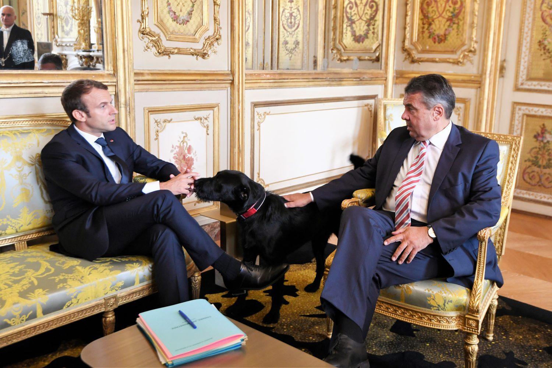 Cão de Macron arranca risadas ao fazer xixi durante reunião
