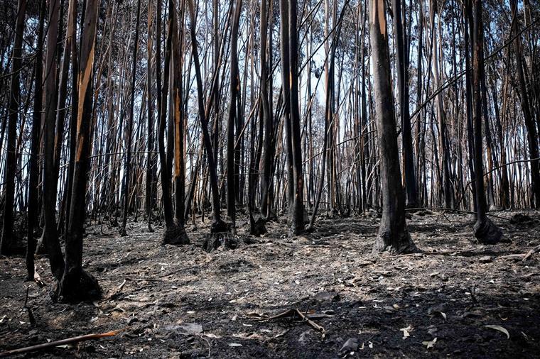 Governo já apoiou 35 projetos de empresas afetadas pelo incêndio de Pedrógão Grande
