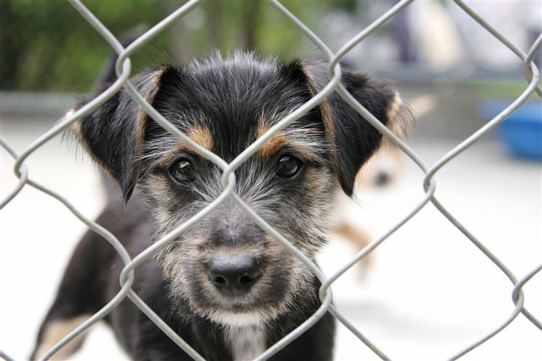 69 animais que sofriam maus tratos foram resgatados pela GNR