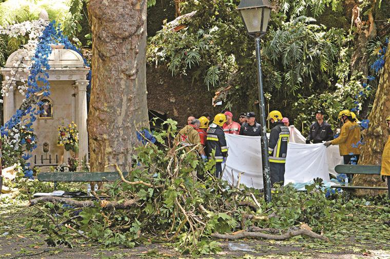 Queda de árvore mata 13 pessoas em festival religioso de Portugal — Vídeo