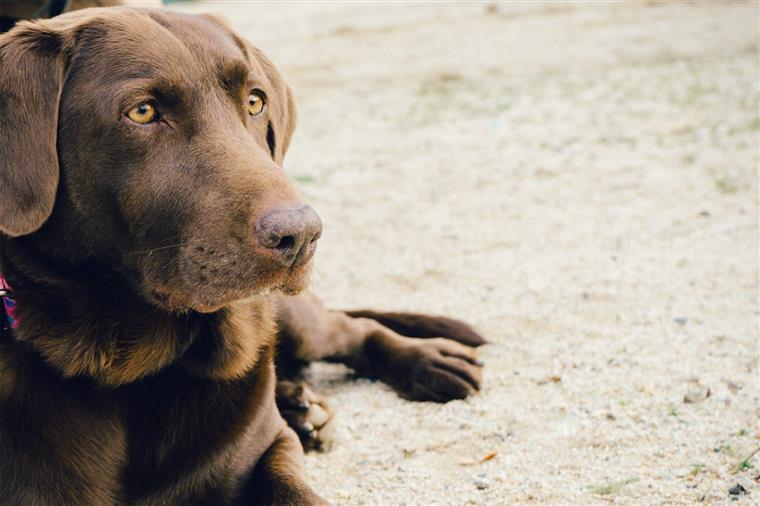 'O meu cão avisou-me que eu estava a ter um ataque cardíaco'