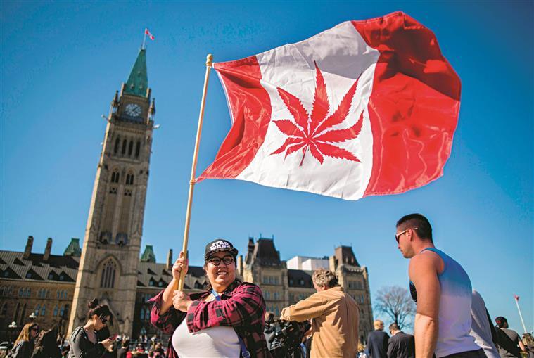 Canadá. Luz verde à legalização da canábis para uso recreativo