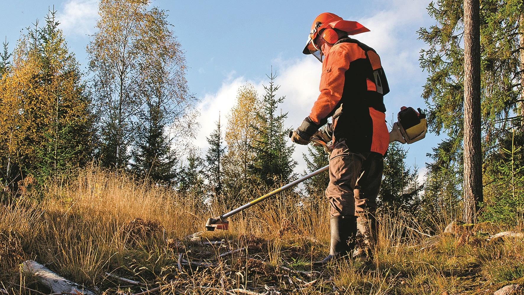 Multas só começam a ser cobradas em junho — Limpeza dos terrenos
