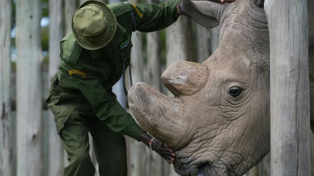 Morreu o último rinoceronte branco do norte macho