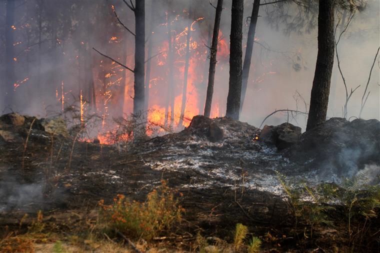 Cinco pessoas detidas por crime de incêndio florestal
