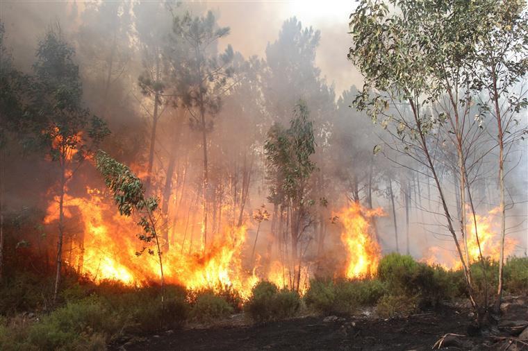 PJ detém suposto incendiário em Oliveira de Azeméis