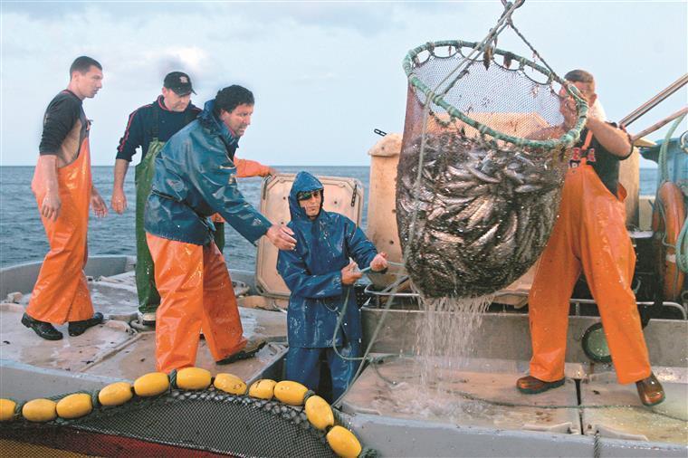 Pescadores já pensam nas sardinhas de 2020