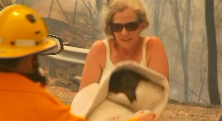 Mulher arrisca vida para salvar coala de incêndio | VÍDEO