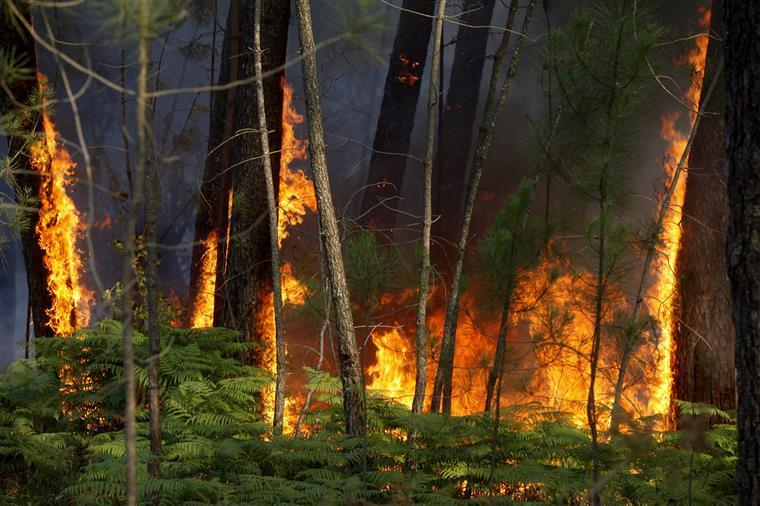 Maioria dos fogos são de pequena dimensão