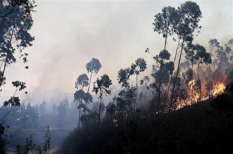 Protecção Civil acredita que fogo será extinto durante a noite