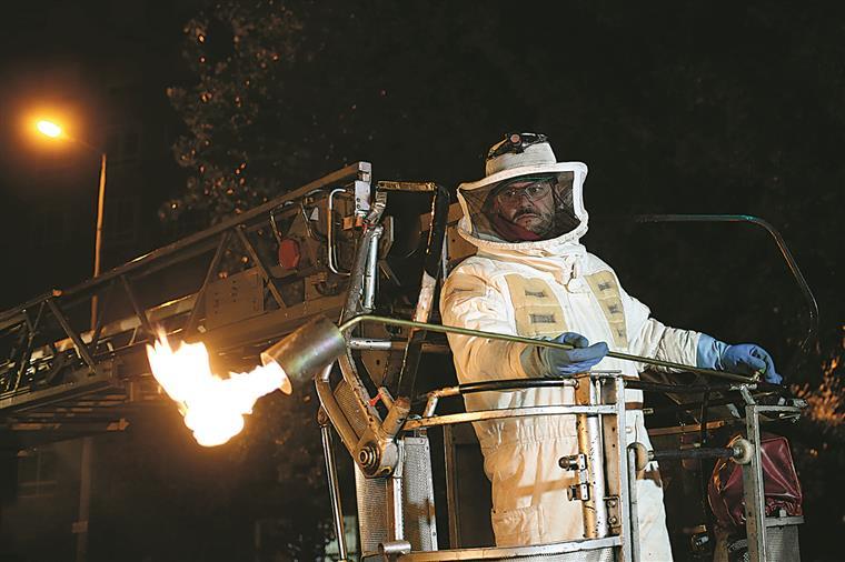 É durante a noite que os apicultores eliminam os vespeiros