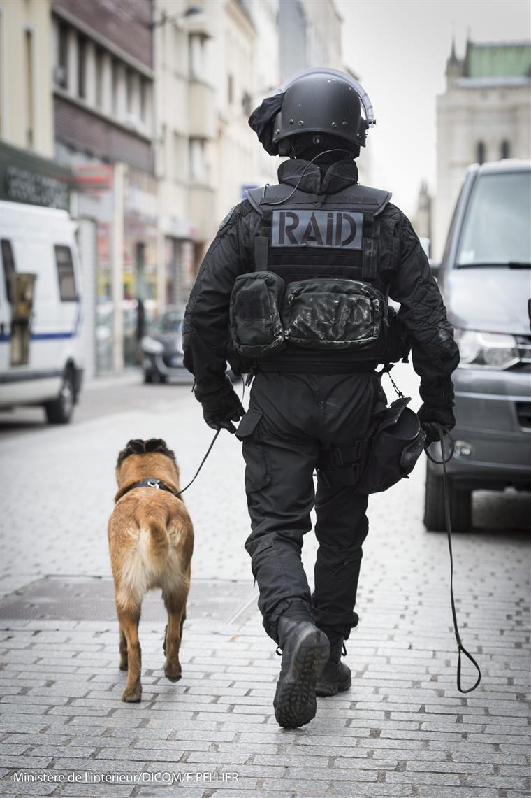 Os cães de assalto e especializados na detecção de explosivos são vitais nas operações da RAID