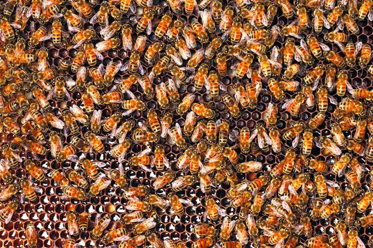 Bento inventou uma colmeia climatizada para proteger as abelhas das alterações climáticas