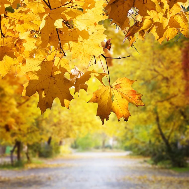 Outono chegou às 9h20