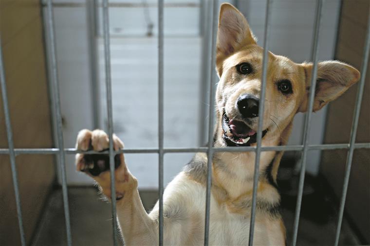 Em 2014, quase 32 mil animais chegaram aos canis e gatis municipais