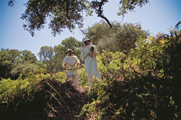 O fumigador é um instrumento essencial da actividade apícola. Tem um depósito onde se coloca lenha miúda e, quando esta entra em combustão, juntam-se ervas aromáticas (eucalipto, rosmaninho, esteva) para fazer fumo
