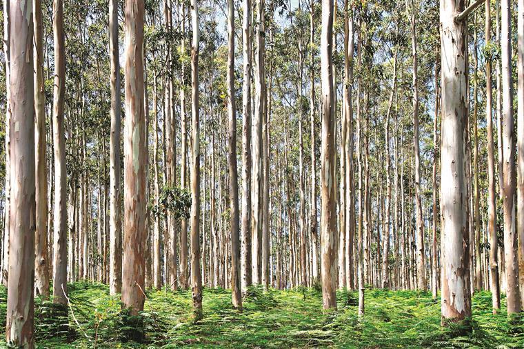 Incêndios: 35 milhões para apoiar agricultura e florestas