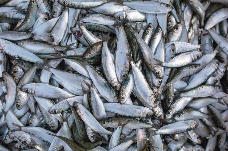 Portugal e Espanha sem sardinhas em 2018