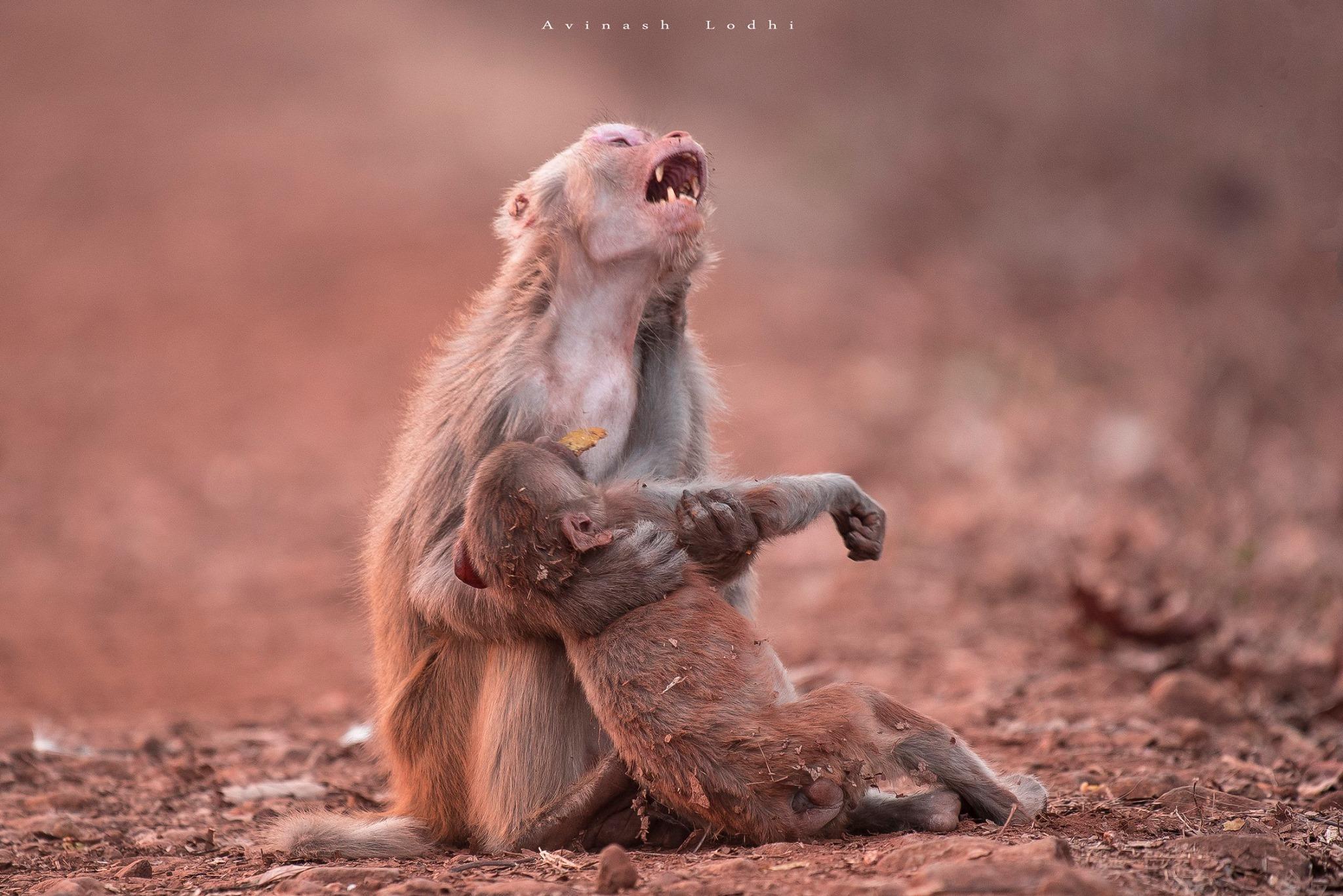 Internautas ficam comovidos com foto de macaca chorando ao socorrer filhote