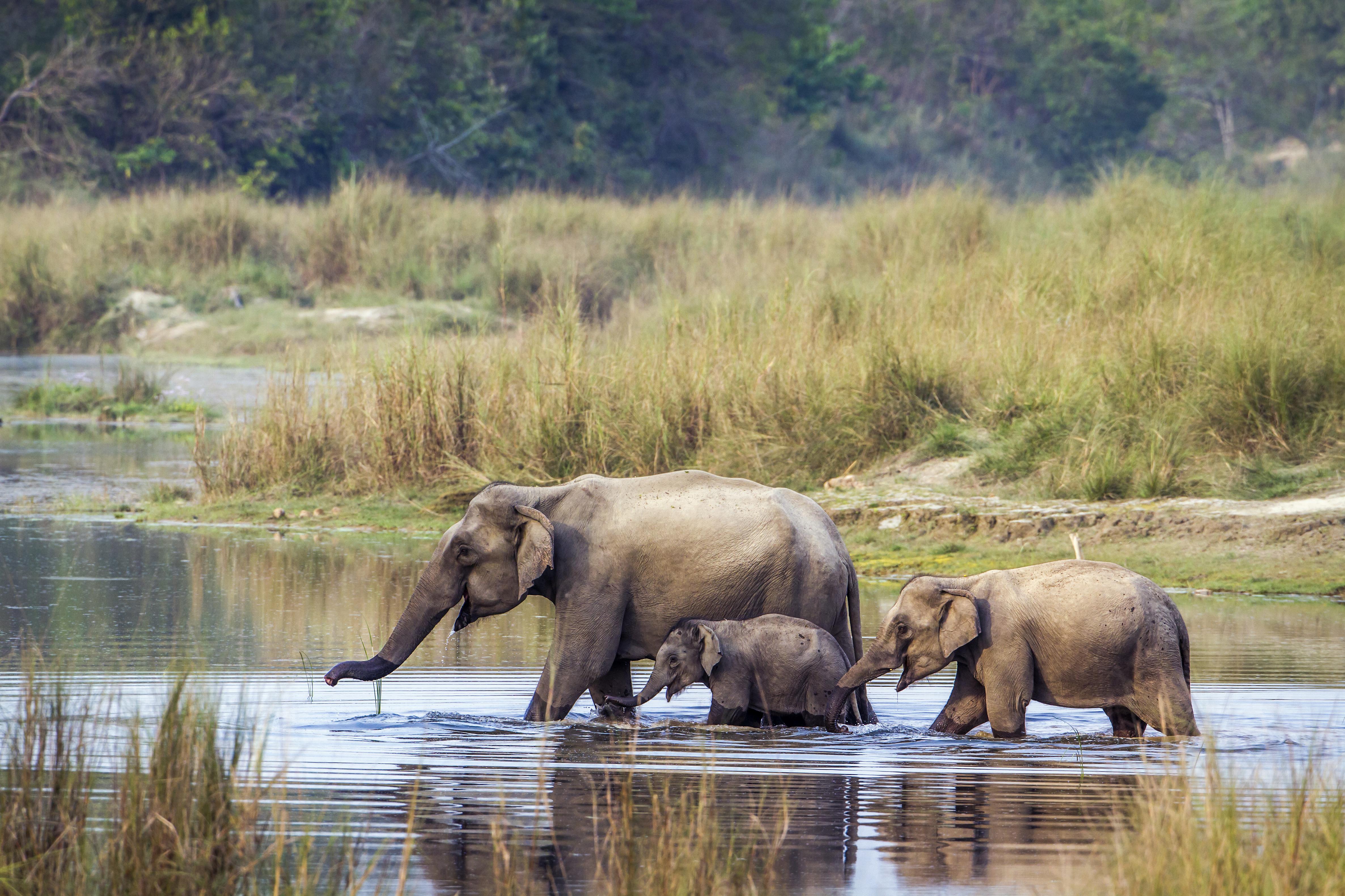 Caçador morre esmagado por elefante abatido