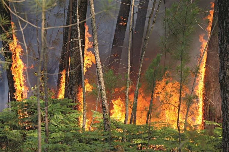 Incêndios da última semana já fizeram 74 feridos