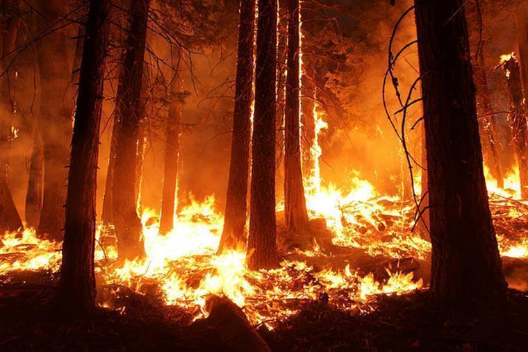 Os 7 principais fogos lavram em Castelo Branco, Leiria, Viseu, Viana do Castelo e Braga