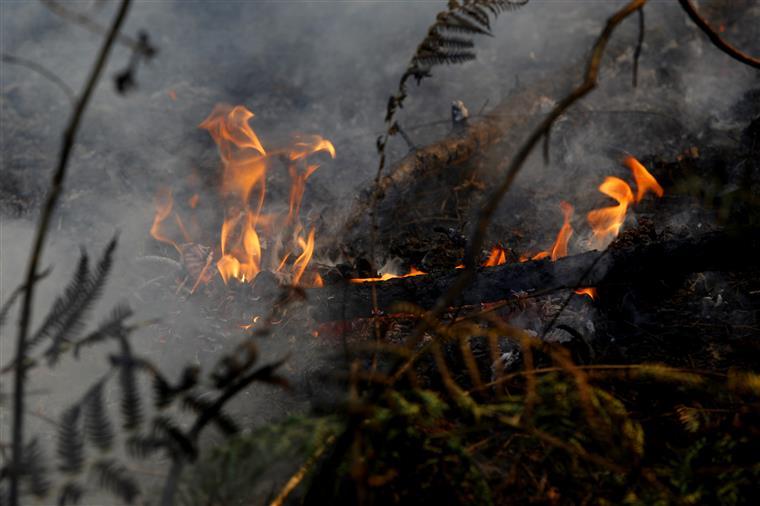 Fogo queima zona de mato entre Odivelas e Lisboa