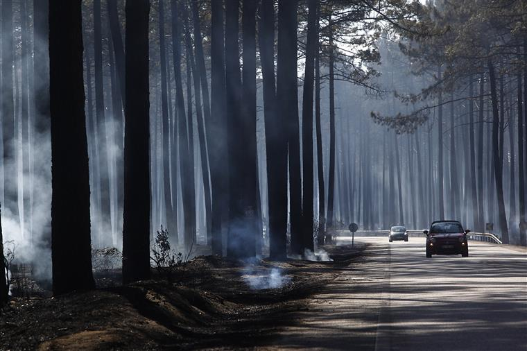 PJ confirma mão criminosa em incêndios no Pinhal de Leiria