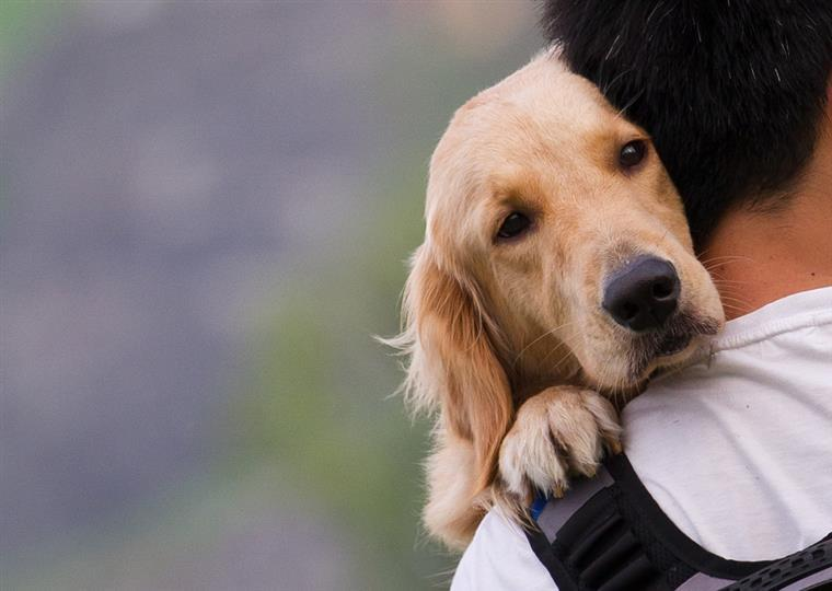 Esta cadela 'guardou' o corpo da dona durante semanas até serem encontradas