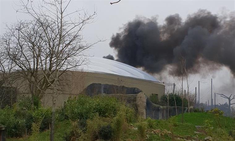 Jardim zoológico britânico evacuado depois de incêndio   Vídeo
