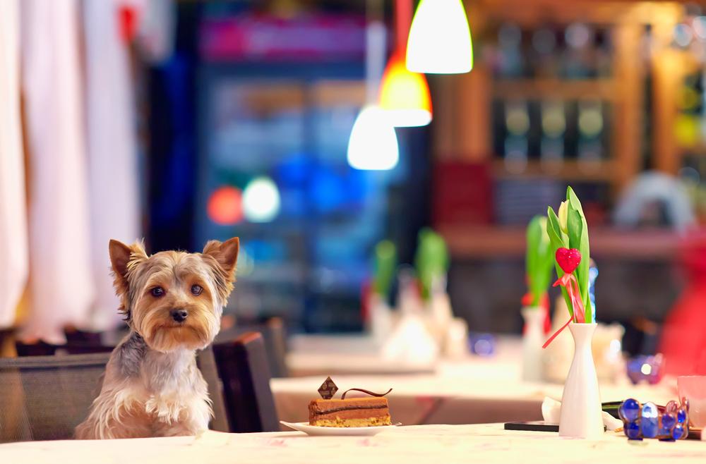 A partir de maio, pode levar o seu cão ao restaurante