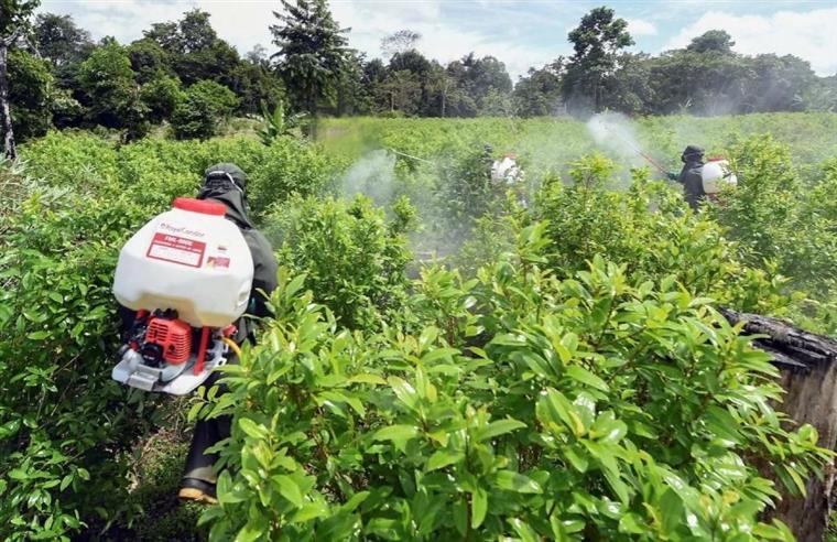Colômbia. Drones estão a ser usados para destruir plantações de coca