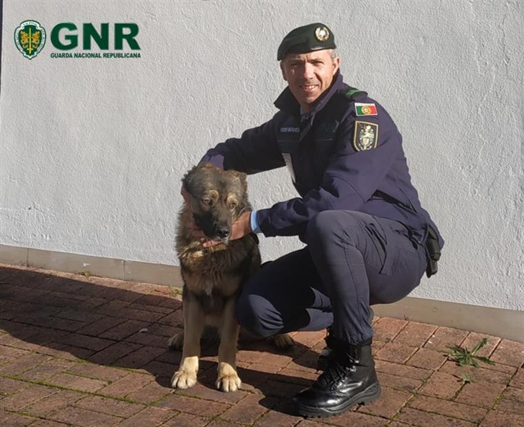 GNR recupera cão que estava desaparecido há cerca de ano