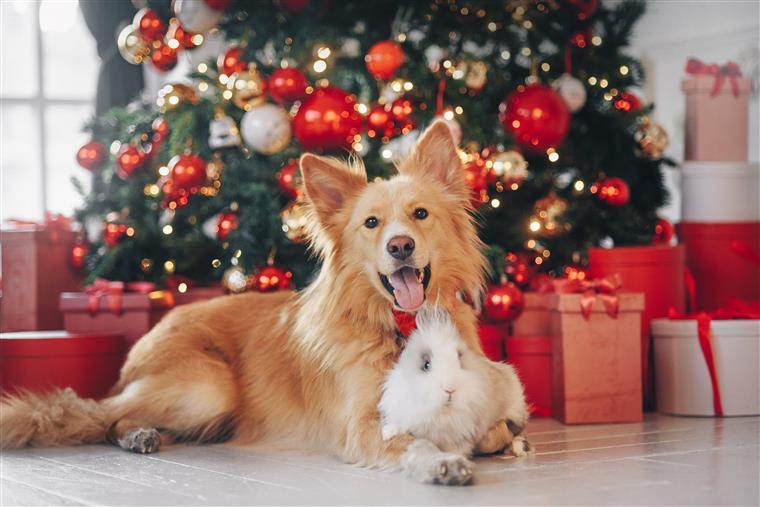 Lisboa vai ter pela primeira vez um Natal dos Animais