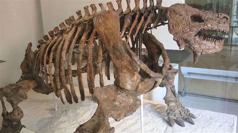 Descobertos os mais antigos ovos de dinossauros carnívoros do mundo na  Lourinhã 4d351354907